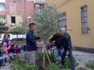 semina-albero-plesso-marullo0